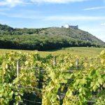 Южная Моравия —  край виноградников, зеленых холмов и древних замков Чехии.