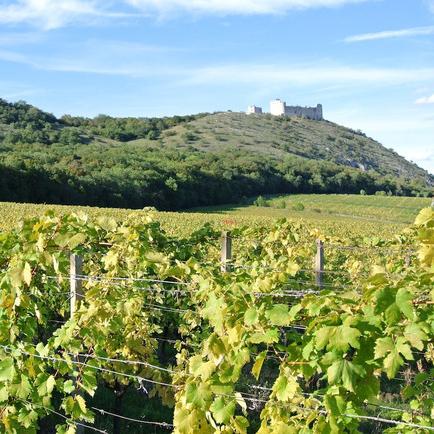 Южная Моравия — край виноградников, зеленых холмов и древних замков Чехии